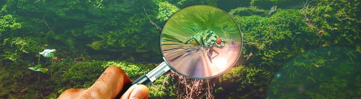 loupe insecte-Marie Range t'offre des solutions complètes, larges, mais qui vont aussi chercher la petite bête !